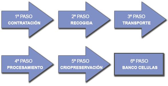 Cuadro Procesos Criopreservación Células Madre